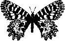 logo for Societas Europaea Lepidopterologica