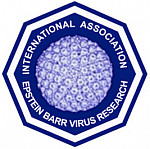 logo for International Association for Research on Epstein-Barr Virus and Associated Diseases